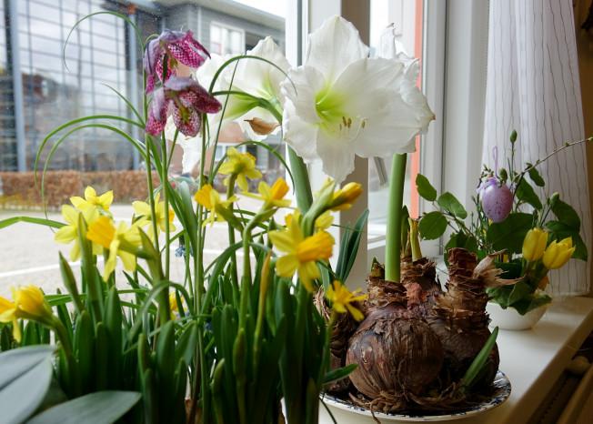 Bloemen voor het raam van zorglocatie Elim in Putten
